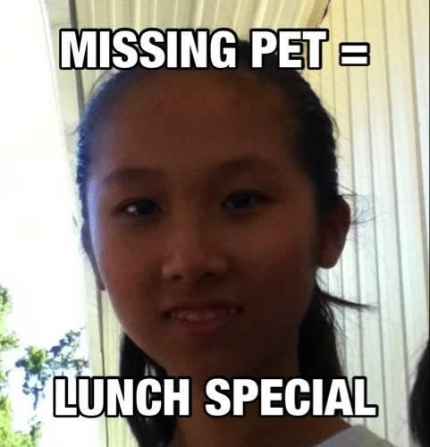 lunch special, your cat