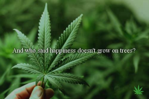 Happiness does grow on trees