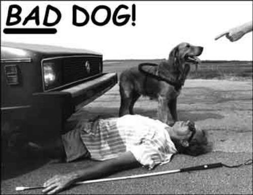 Bad seeing eye dog