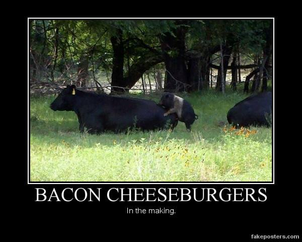 Making bacon cheeseburgers