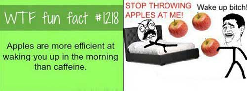 Fun fact about apples
