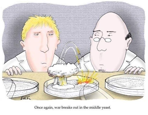 War in the middle yeast