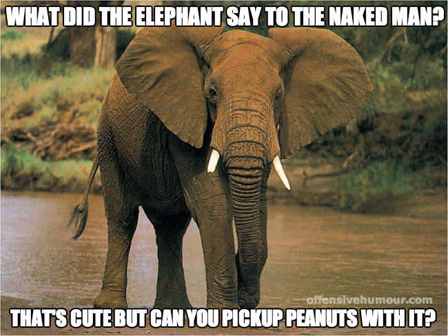 What did the elephant say...